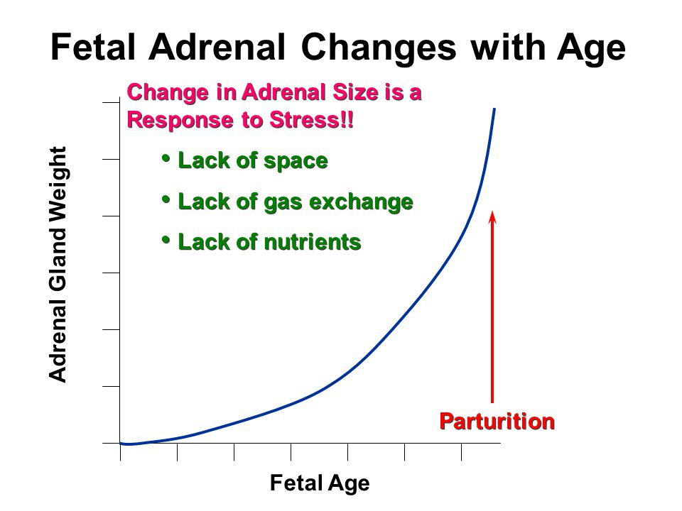 Fetal Adrenal Changes with Age Fetal Age Adrenal Gland Weight Parturition Change in Adrenal Size is a Response to Stress!.