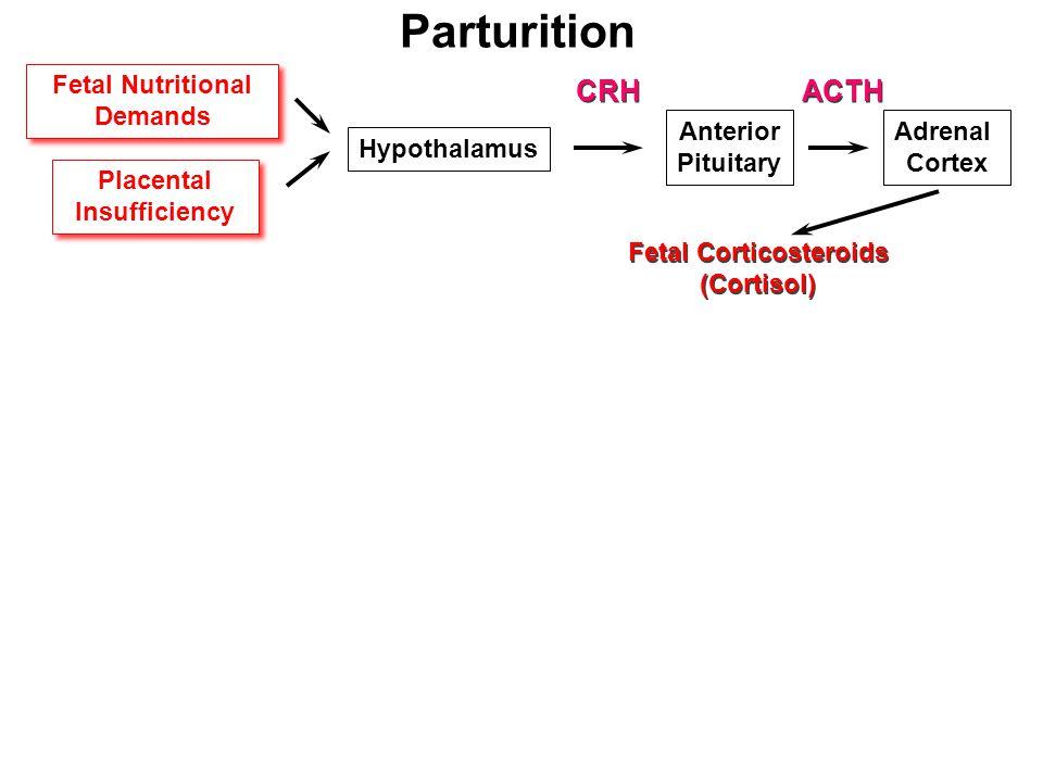 Parturition Fetal Nutritional Demands Fetal Nutritional Demands Placental Insufficiency Placental Insufficiency Hypothalamus Anterior Pituitary Adrenal Cortex CRH ACTH Fetal Corticosteroids (Cortisol) Fetal Corticosteroids (Cortisol)