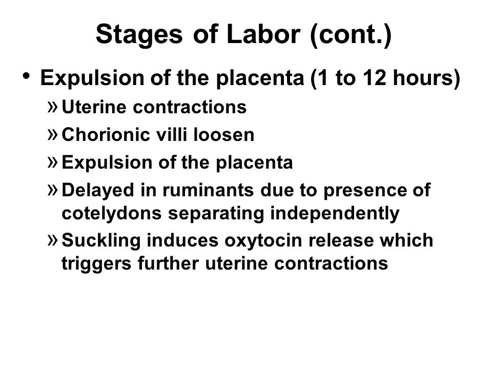 Stages of Labor (cont.) Expulsion of the placenta (1 to 12 hours) » Uterine contractions » Chorionic villi loosen » Expulsion of the placenta » Delayed in ruminants due to presence of cotelydons separating independently » Suckling induces oxytocin release which triggers further uterine contractions
