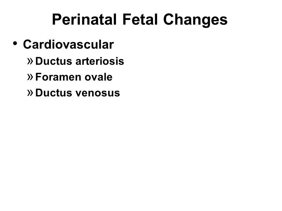Perinatal Fetal Changes Cardiovascular » Ductus arteriosis » Foramen ovale » Ductus venosus