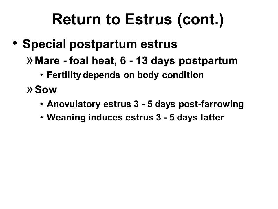 Return to Estrus (cont.) Special postpartum estrus » Mare - foal heat, 6 - 13 days postpartum Fertility depends on body condition » Sow Anovulatory estrus 3 - 5 days post-farrowing Weaning induces estrus 3 - 5 days latter