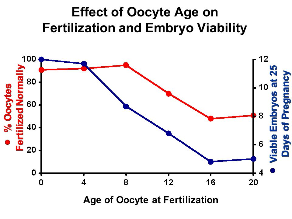 Effect of Oocyte Age on Fertilization and Embryo Viability % Oocytes Fertilized Normally Viable Embryos at 25 Days of Pregnancy Age of Oocyte at Fertilization
