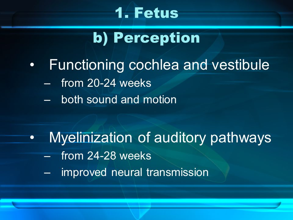 1. Fetus b) Perception Functioning cochlea and vestibule –from 20-24 weeks –both sound and motion Myelinization of auditory pathways –from 24-28 weeks