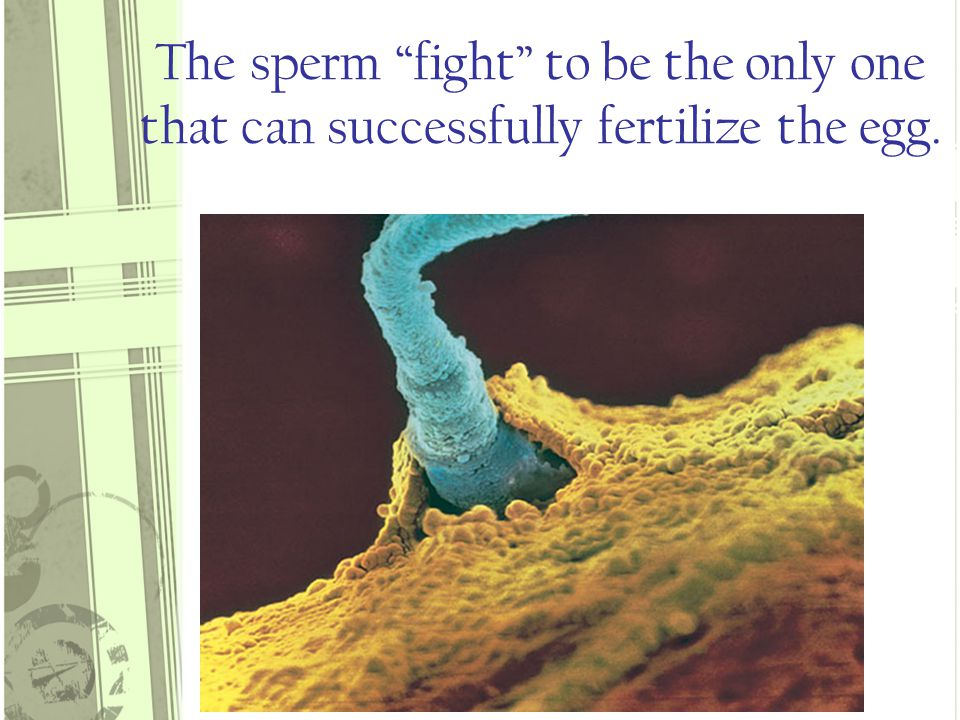 What are those sperm really doing in there?