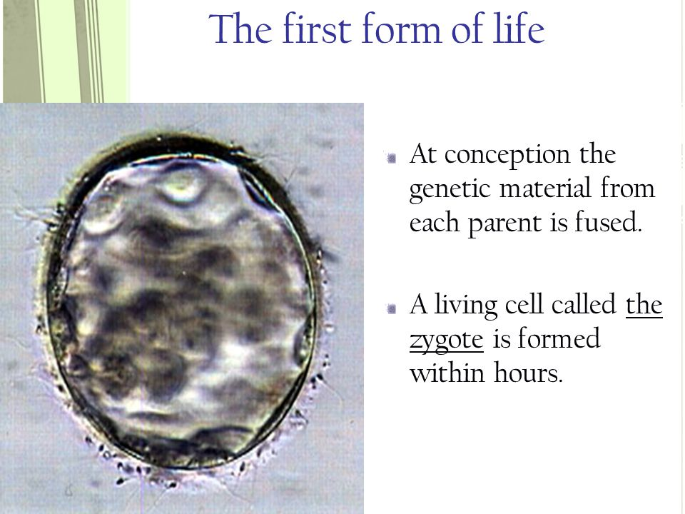 TRUE OR FALSE.Approximately 20% of all embryos are aborted spontaneously TRUE.