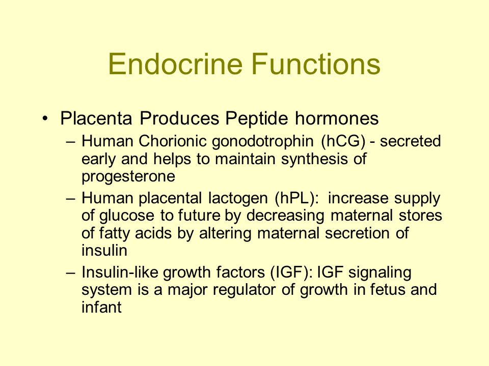 Endocrine Functions Placenta Produces Peptide hormones –Human Chorionic gonodotrophin (hCG) - secreted early and helps to maintain synthesis of proges