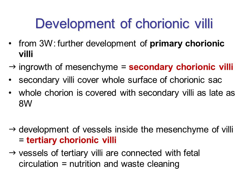 Development of chorionic villi from 3W: further development of primary chorionic villi  ingrowth of mesenchyme = secondary chorionic villi secondary villi cover whole surface of chorionic sac whole chorion is covered with secondary villi as late as 8W  development of vessels inside the mesenchyme of villi = tertiary chorionic villi  vessels of tertiary villi are connected with fetal circulation = nutrition and waste cleaning