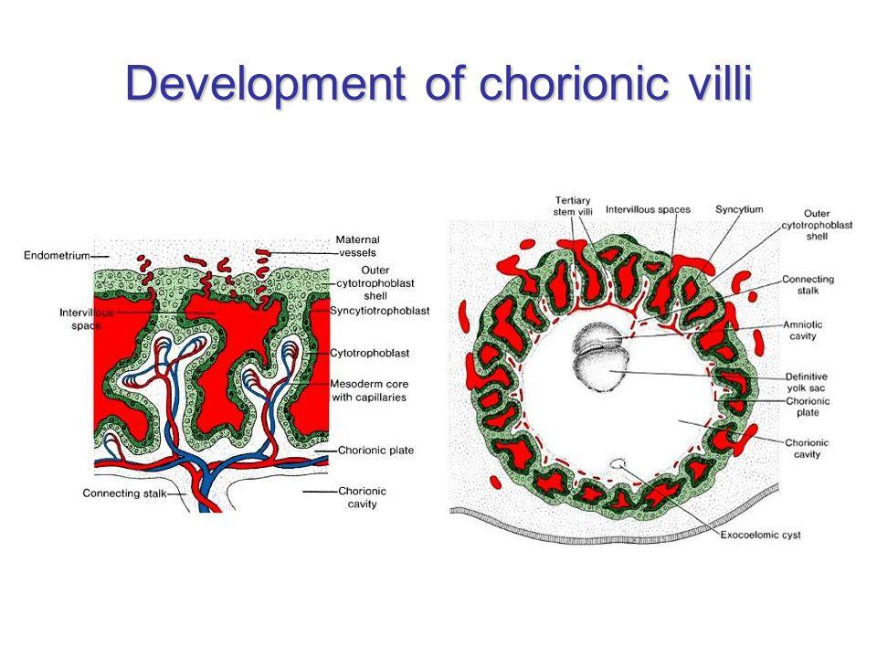 Development of chorionic villi