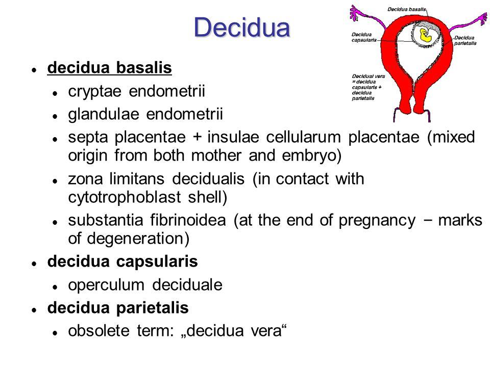 "Decidua decidua basalis cryptae endometrii glandulae endometrii septa placentae + insulae cellularum placentae (mixed origin from both mother and embryo) zona limitans decidualis (in contact with cytotrophoblast shell) substantia fibrinoidea (at the end of pregnancy – marks of degeneration) decidua capsularis operculum deciduale decidua parietalis obsolete term: ""decidua vera"