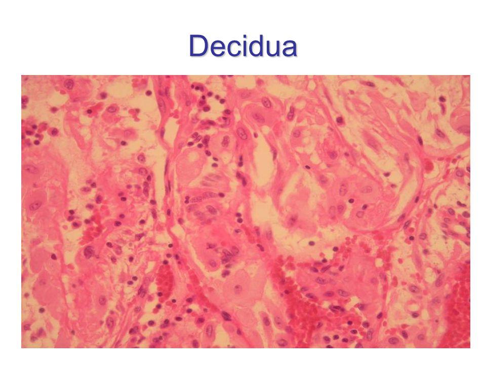 Decidua