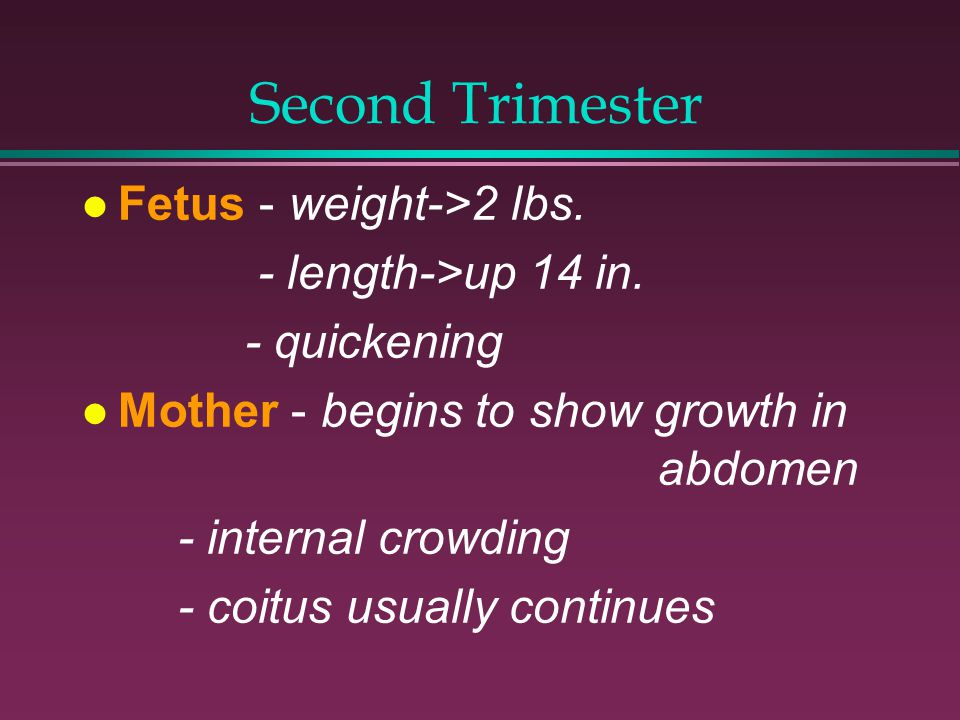 Second Trimester Fetus - weight->2 lbs. - length->up 14 in.