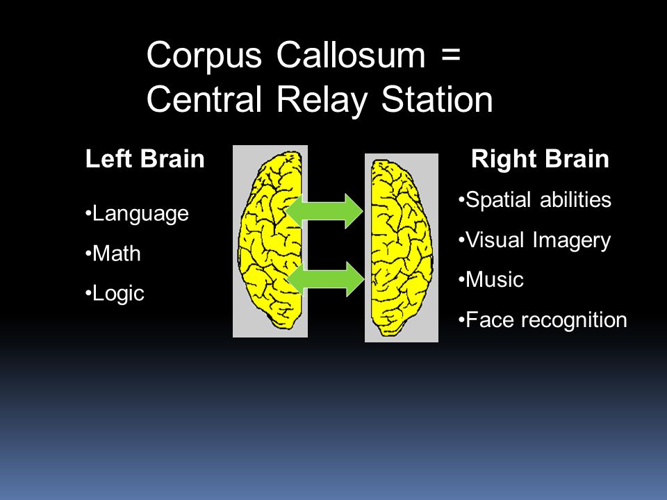 Corpus Callosum = Central Relay Station Left Brain Language Math Logic Right Brain Spatial abilities Visual Imagery Music Face recognition