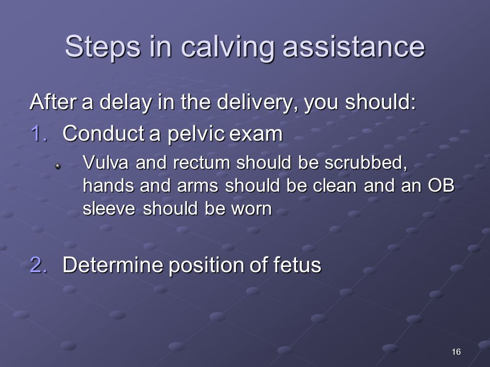 16 Steps in calving assistance After a delay in the delivery, you should: 1.Conduct a pelvic exam Vulva and rectum should be scrubbed, hands and arms should be clean and an OB sleeve should be worn 2.Determine position of fetus