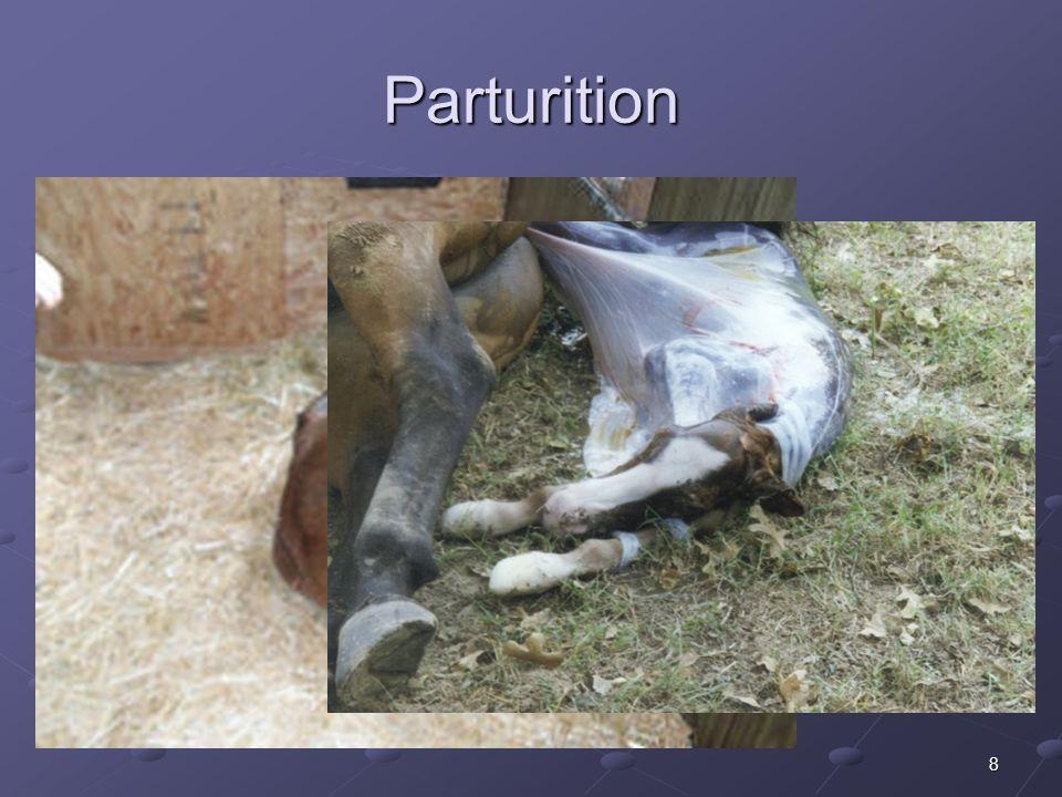 8 Parturition
