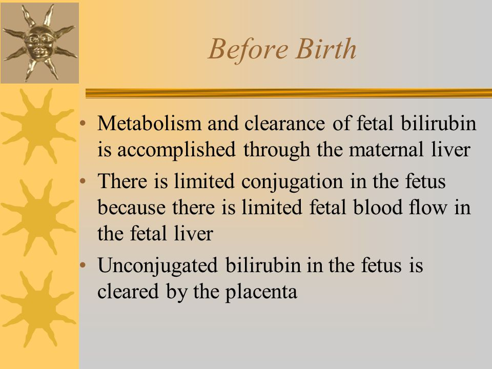 Before Birth Metabolism and clearance of fetal bilirubin is accomplished through the maternal liver There is limited conjugation in the fetus because there is limited fetal blood flow in the fetal liver Unconjugated bilirubin in the fetus is cleared by the placenta