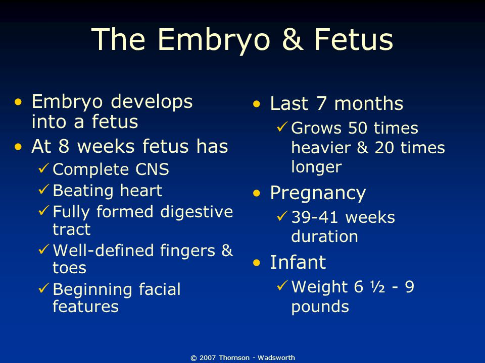 © 2007 Thomson - Wadsworth The Embryo & Fetus Embryo develops into a fetus At 8 weeks fetus has Complete CNS Beating heart Fully formed digestive tract Well-defined fingers & toes Beginning facial features Last 7 months Grows 50 times heavier & 20 times longer Pregnancy 39-41 weeks duration Infant Weight 6 ½ - 9 pounds