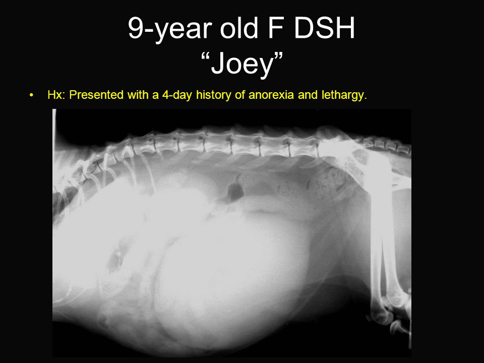9-year old F DSH Joey Hx: Presented with a 4-day history of anorexia and lethargy.