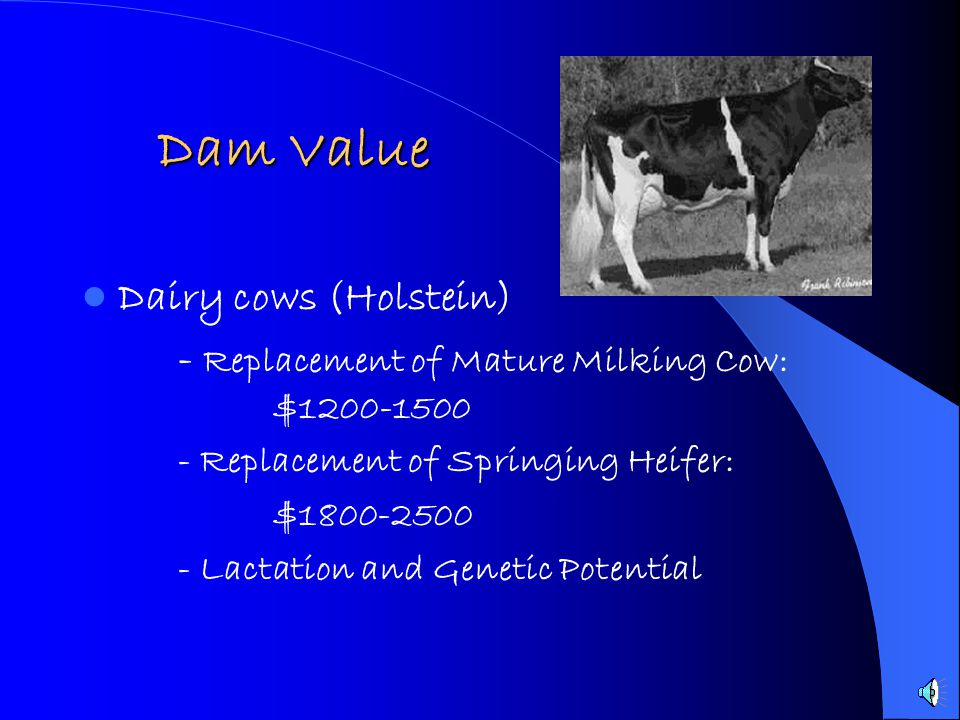 Dam Value Dam Value Dairy cows (Holstein) - Replacement of Mature Milking Cow: $1200-1500 - Replacement of Springing Heifer: $1800-2500 - Lactation and Genetic Potential