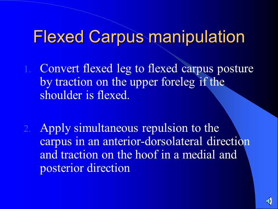 Flexed Carpus manipulation 1. Convert flexed leg to flexed carpus posture by traction on the upper foreleg if the shoulder is flexed. 2. Apply simulta