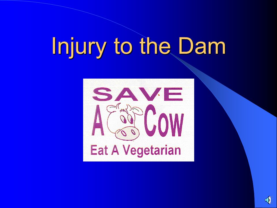 Injury to the Dam