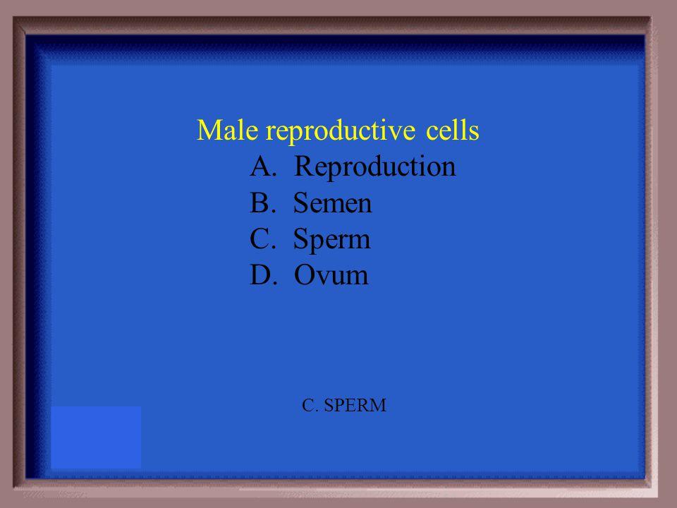 Male reproductive cells A. Reproduction B. Semen C. Sperm D. Ovum C. SPERM