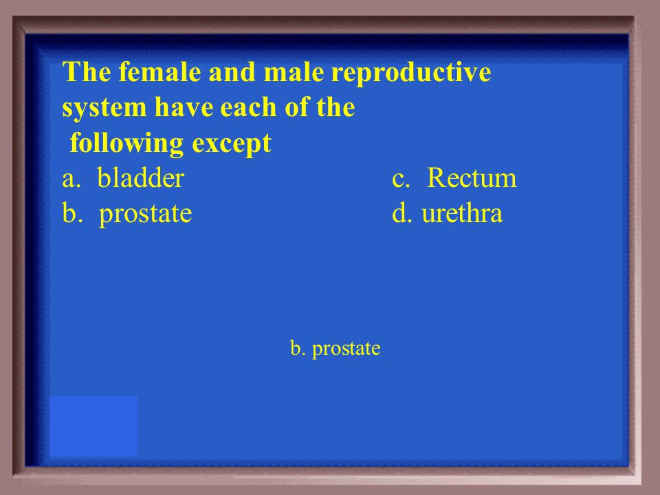 All of the following parts are found in the male except a. prostate b. cowpers gland c. vas deferens d. cervix D. Cervix