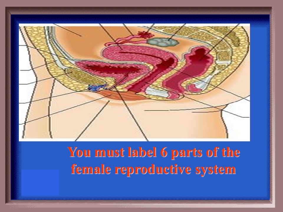 At the time of delivery the cervix a. remains closed for protection of the fetus b. dilates for the fetus to be moved through the birth canal c. remai