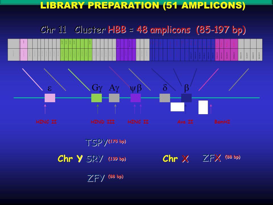 HINC IIHIND IIIHINC IIAva IIBamHI  GG AA  TSPYZFY SRY Y Chr Y X Chr X ZFX (88 bp) (139 bp) (175 bp) (88 bp) Chr 11 Cluster HBB = 48 amplicons (85-197 bp) LIBRARY PREPARATION (51 AMPLICONS)
