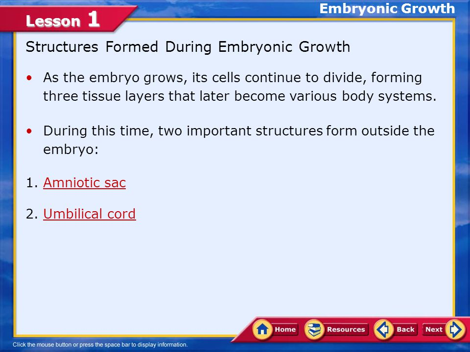 Lesson 1 Embryo Click image to view movie. Conception and Implantation
