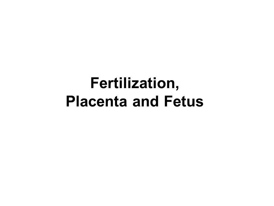 Fertilization, Placenta and Fetus