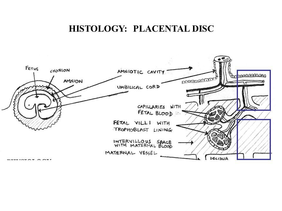 HISTOLOGY: PLACENTAL DISC