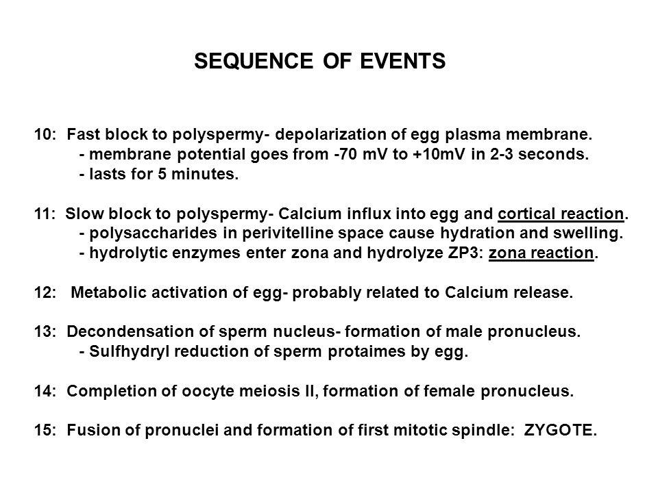 10: Fast block to polyspermy- depolarization of egg plasma membrane. - membrane potential goes from -70 mV to +10mV in 2-3 seconds. - lasts for 5 minu