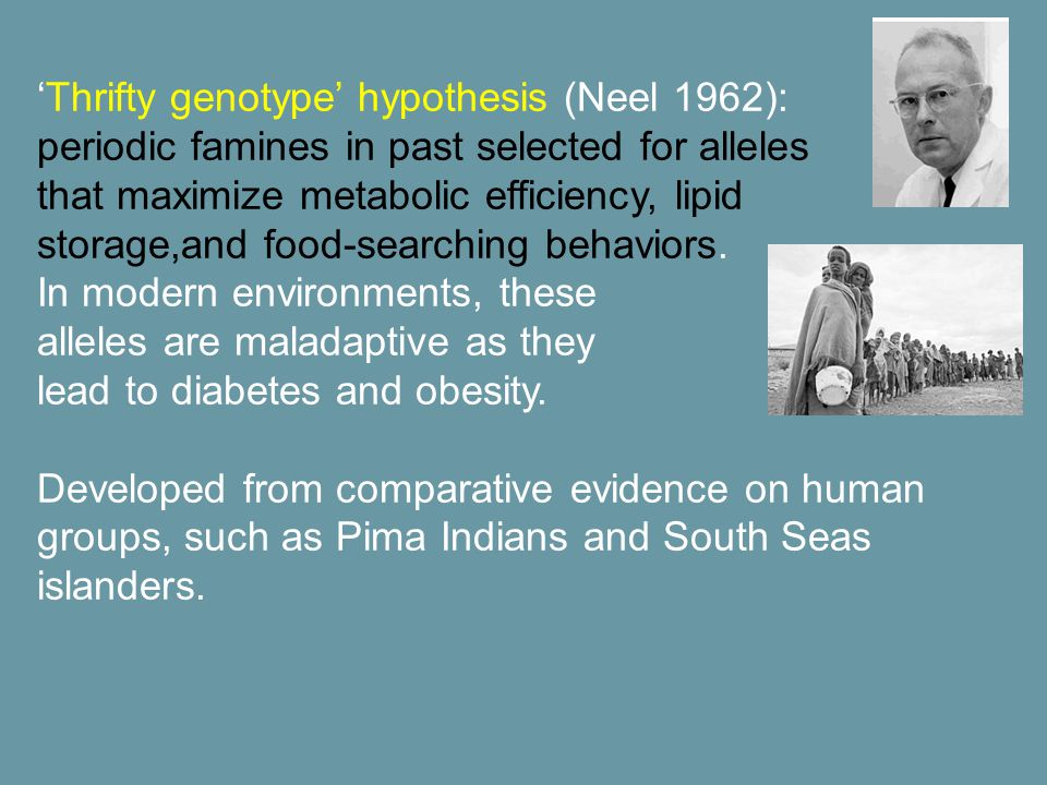 'Thrifty genotype' hypothesis (Neel 1962): periodic famines in past selected for alleles that maximize metabolic efficiency, lipid storage,and food-searching behaviors.