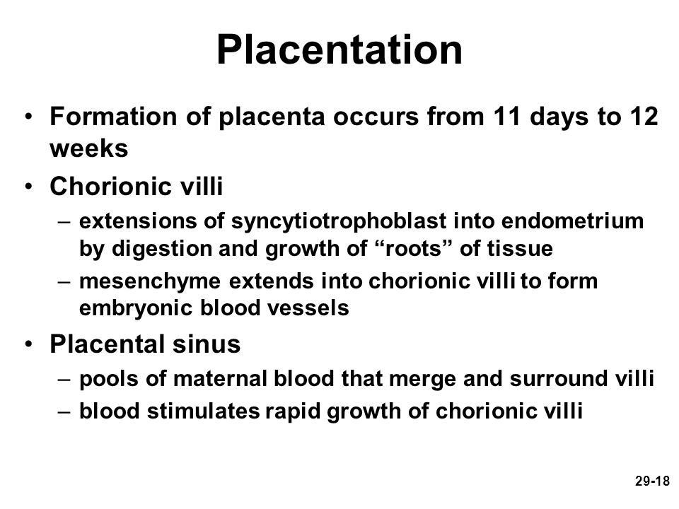 29-18 Placentation Formation of placenta occurs from 11 days to 12 weeks Chorionic villi –extensions of syncytiotrophoblast into endometrium by digest