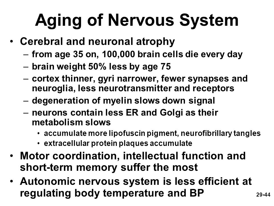 29-44 Aging of Nervous System Cerebral and neuronal atrophy –from age 35 on, 100,000 brain cells die every day –brain weight 50% less by age 75 –corte