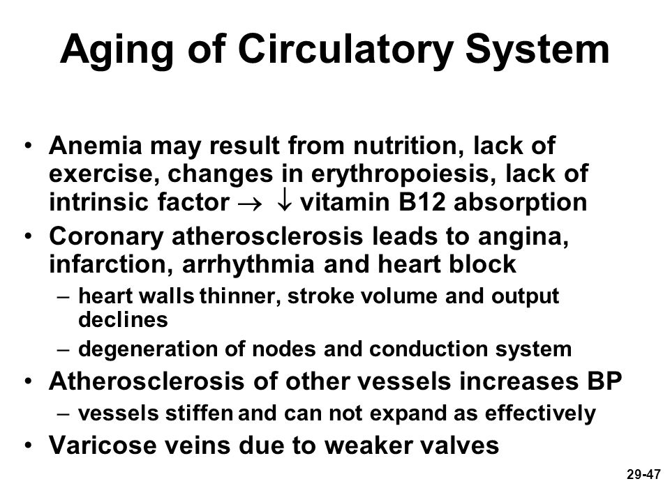29-47 Aging of Circulatory System Anemia may result from nutrition, lack of exercise, changes in erythropoiesis, lack of intrinsic factor   vitamin