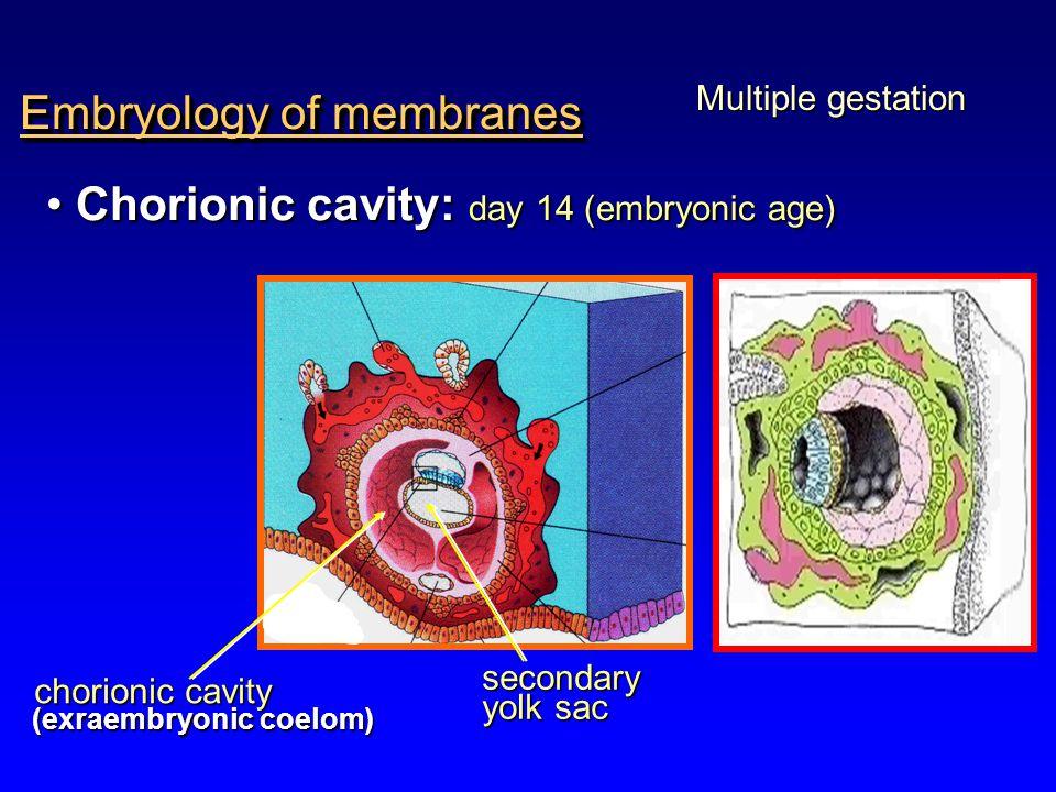 Embryology of membranes Multiple gestation Chorionic cavity: day 14 (embryonic age) Chorionic cavity: day 14 (embryonic age) chorionic cavity chorioni