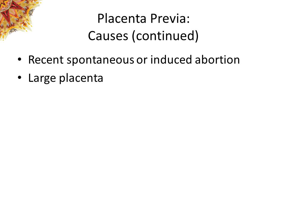 Placenta Previa: Causes (continued) Recent spontaneous or induced abortion Large placenta