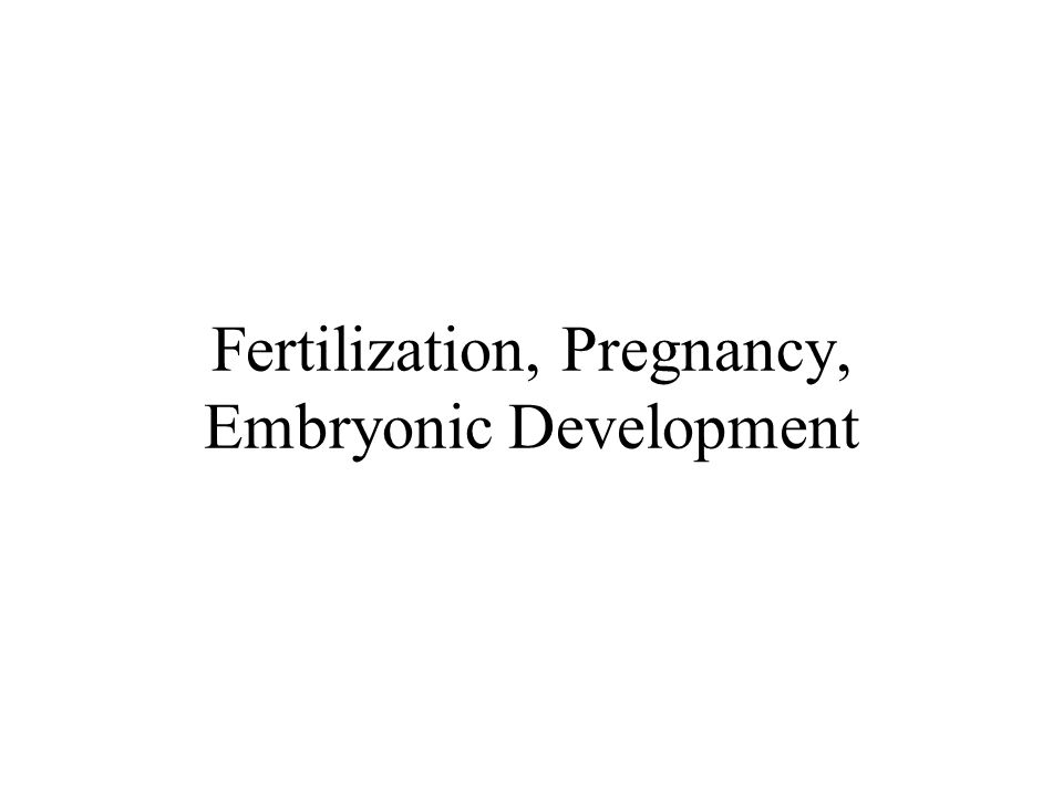 Corticosteroids –In fetus, progesterone is precursor to adrenocortical hormones –Glucocorticoids Gen'ly growth inhibitors, so minimized Placental enz's break down maternal glucocort's –Uses maternal ACTH at fetal adrenal cortex –Diff enzymes expressed @ diff dev'l stages –25 th gestational week, rising corticosteroids Impt to feedback mech's Impt to organ maturation