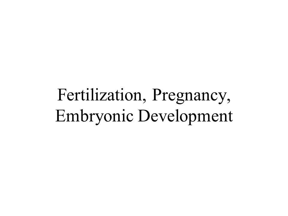 Fertilization, Pregnancy, Embryonic Development