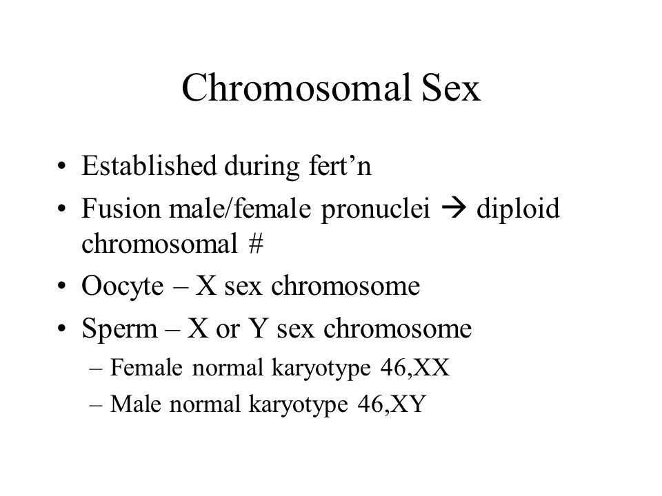 Chromosomal Sex Established during fert'n Fusion male/female pronuclei  diploid chromosomal # Oocyte – X sex chromosome Sperm – X or Y sex chromosome