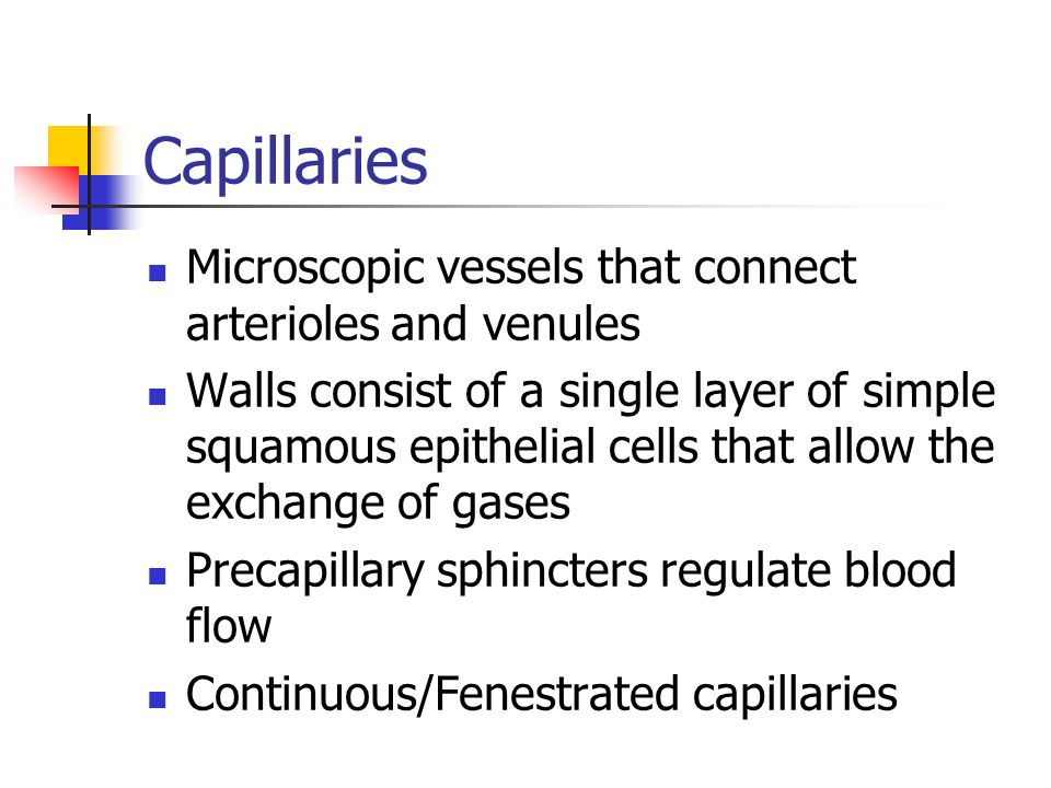 Capillaries Microscopic vessels that connect arterioles and venules Walls consist of a single layer of simple squamous epithelial cells that allow the