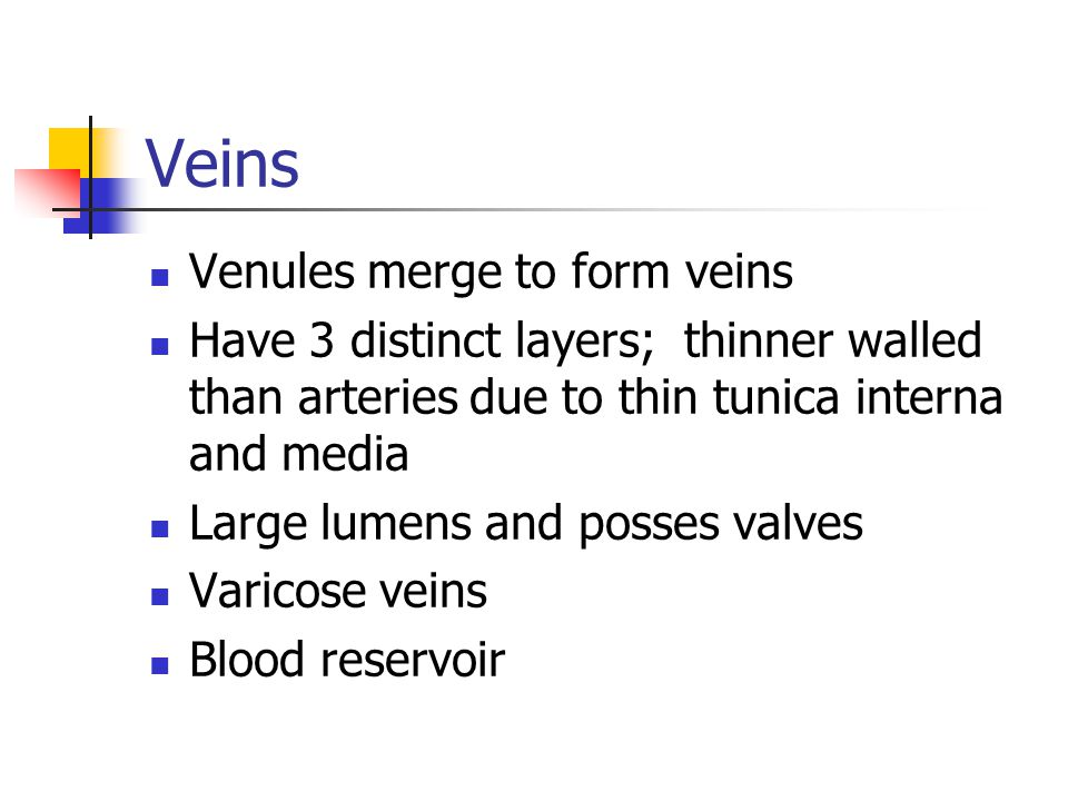 Veins Venules merge to form veins Have 3 distinct layers; thinner walled than arteries due to thin tunica interna and media Large lumens and posses va