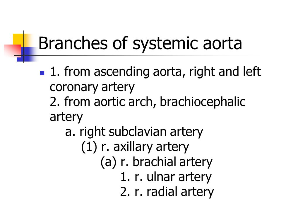 Branches of systemic aorta 1. from ascending aorta, right and left coronary artery 2. from aortic arch, brachiocephalic artery a. right subclavian art