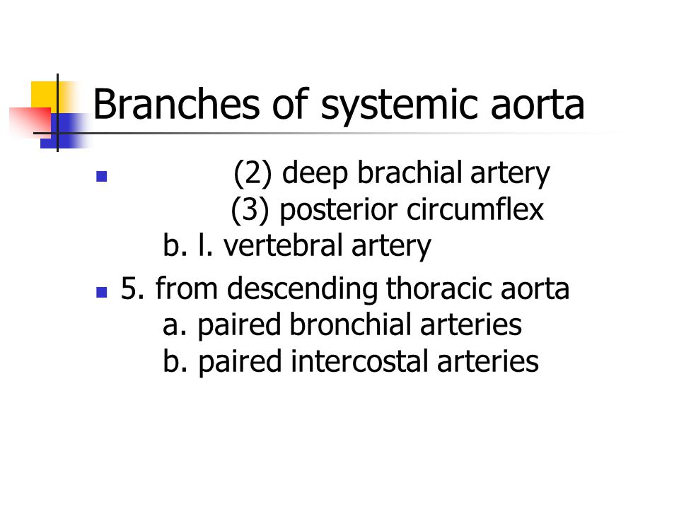 (2) deep brachial artery (3) posterior circumflex b. l. vertebral artery 5. from descending thoracic aorta a. paired bronchial arteries b. paired inte