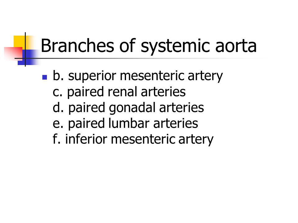 b. superior mesenteric artery c. paired renal arteries d. paired gonadal arteries e. paired lumbar arteries f. inferior mesenteric artery Branches of
