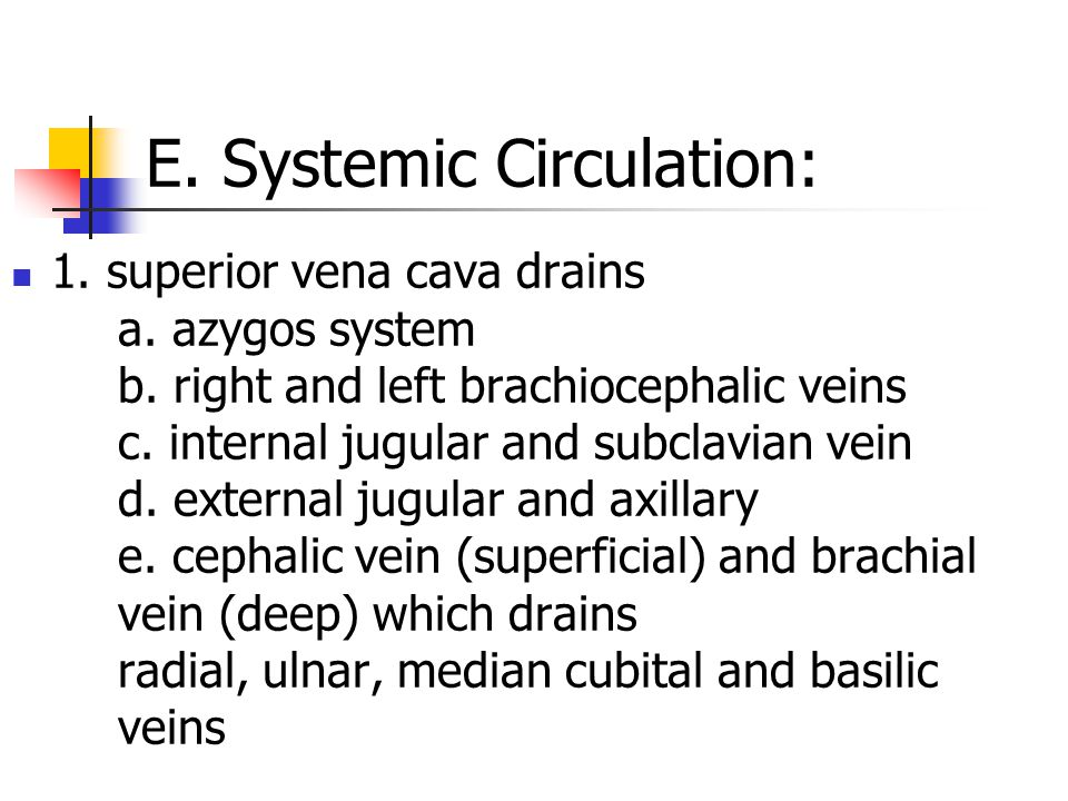 E. Systemic Circulation: 1. superior vena cava drains a. azygos system b. right and left brachiocephalic veins c. internal jugular and subclavian vein