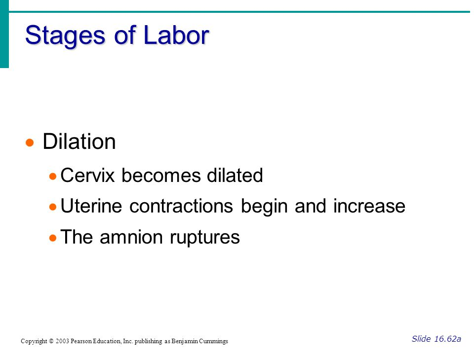 Stages of Labor Slide 16.62a Copyright © 2003 Pearson Education, Inc. publishing as Benjamin Cummings  Dilation  Cervix becomes dilated  Uterine co