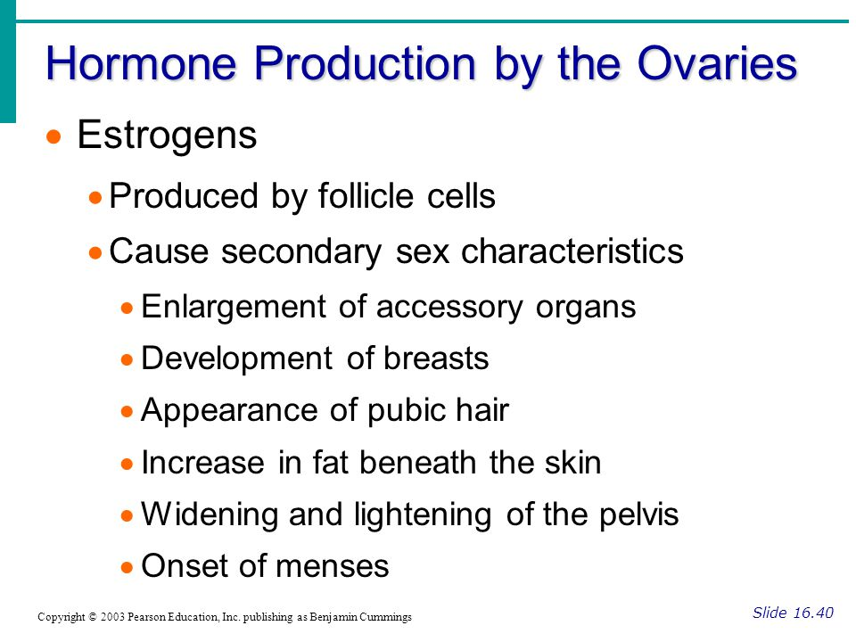 Hormone Production by the Ovaries Slide 16.41 Copyright © 2003 Pearson Education, Inc.