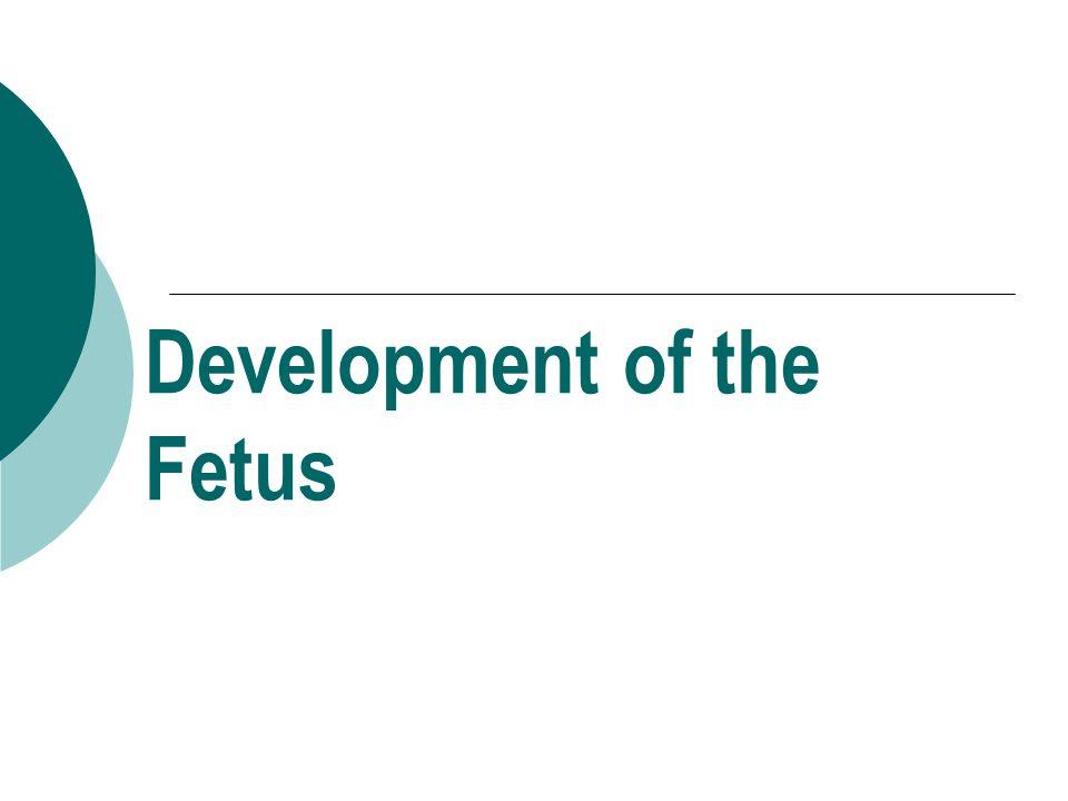 Development of the Fetus